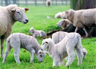 Billede af 'landbruget, landbrug, dyr'