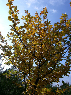 View of tree leaves