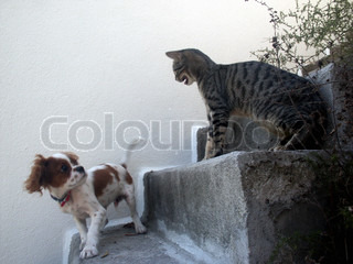 Image of 'domestic, cat, dog'