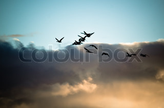 Cranes in flight silhouette
