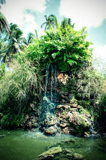 Tropical waterfall with fern