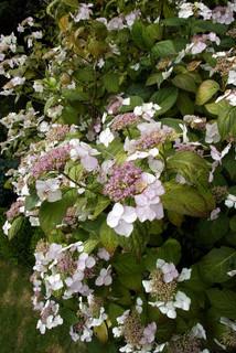 Billede af 'Plant, blomstre, Blomst'