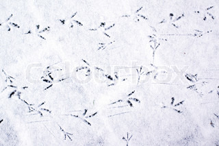 Bird foot steps in snow
