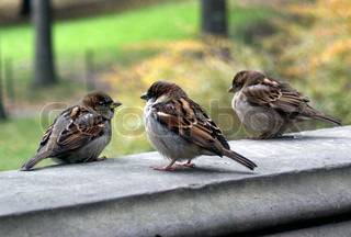 Sparrows sitting against tree
