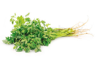 Fresh coriander leaveson white