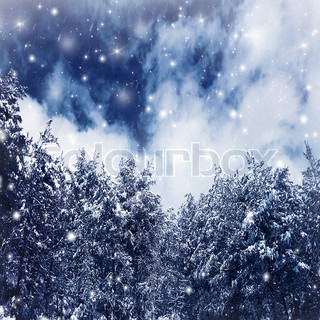 Photo of a beautiful winter forest, big spruce covered with snow, natural border of old Christmas trees over blue sky, fresh wintertime background with falling snowflakes, dreamy fairytale