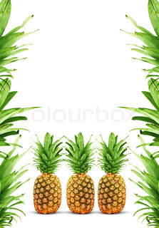 reife ananas auf einem schwarzen hintergrund isoliert stock foto colourbox. Black Bedroom Furniture Sets. Home Design Ideas
