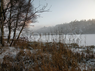 frozen lake with coming up mist surrounded by trees