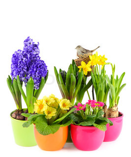 colorful easter decoration with fresh spring flowers