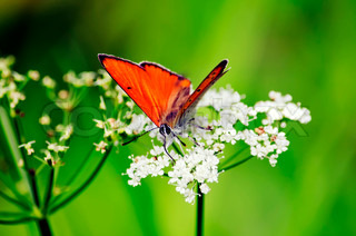 Beautiful natural background - Butterfly on flower against the soft background