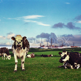Image of 'chemical, cow, environment'