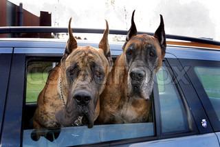 Image of 'car, dog, cars'