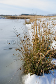 Frozen lake with grass and snow