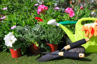 planting flowers with garden tools ,various flowers and herbs in flower pots