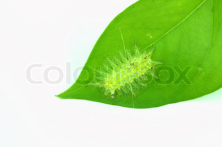 Green worm isolated on white background
