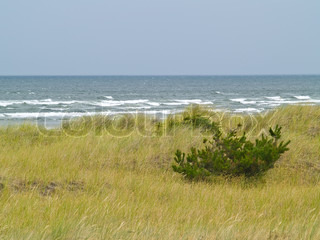 Beach Grass and Beach and Ocean in the Background