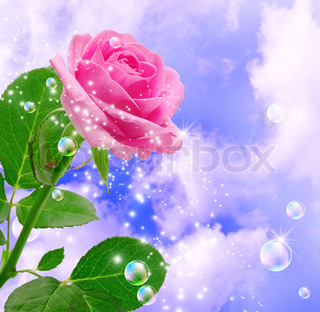 Rose and clouds
