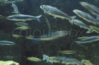 Billede af 'dyr, plymouth, svømning'
