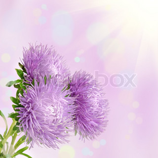 Aster Flower Painting