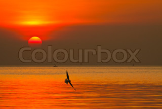 Sunset and Seagulls.