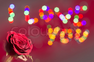 A rose with a message I LOVE YOU in bokeh lights background