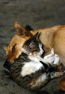 Image of 'cat, dog, pets'