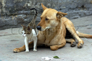 Image of 'cat, dog, pets'