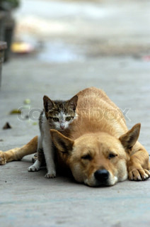 Image of 'dog, cat, cute'