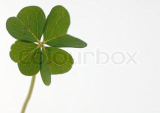 Billede af 'kløver, kløverblads, plante'