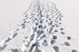 Lots of footprints in snow