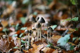 Nærbillede af svampe i skovbunden