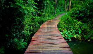 walkway in forest