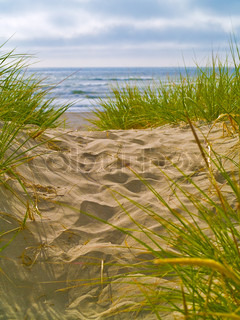 Sandy Path to the Beach with Seagrass
