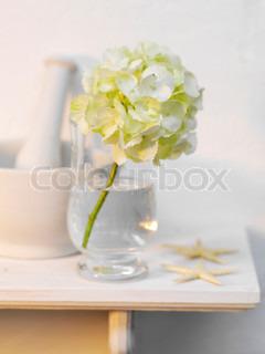 Flot dekoration med blomster og søstjerner