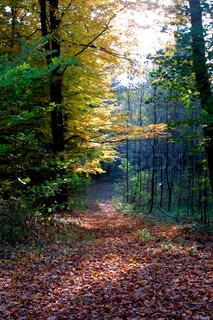 Image of 'autumn, forest, foliage'