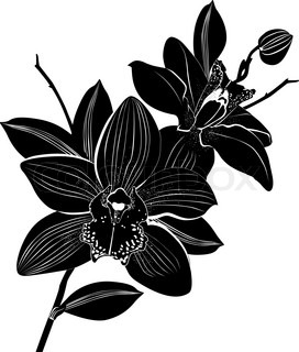 Orchids flowers it is isolated | Vector | Colourbox