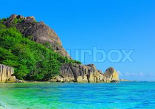Jungle Panorama Summertime