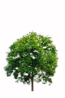 Billede af 'plante, ensomme, naturlandskab'
