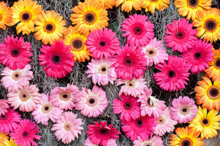 Pink yellow flowers background