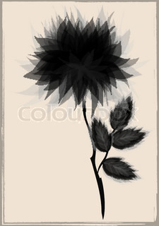 a beautiful black flower, surrounded by vintage frame