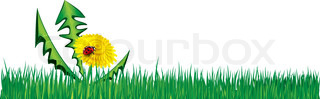 Ladybird on Dandelion in the grass. Vector background