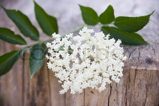 Nærbilled af en hylde blomst
