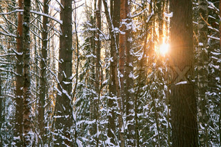 the sun in the winter wood
