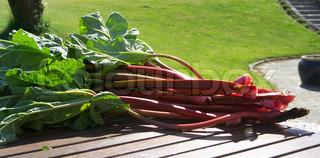 Billede af 'rabarber, køkkenhaver, planter'