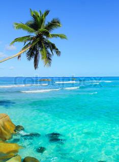 Scene Coconut Wallpaper