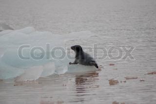 Billede af 'sæler, Nordsøen, tætning'