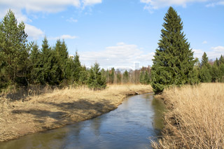 spring landscape with the wood and the river