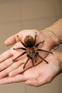 Spider on a woman hand sitting