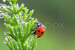 The ladybird creeps on a grass