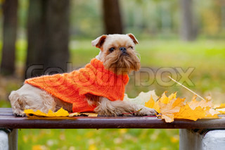 Dog and autumn